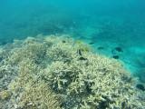 587 Mauritius island - Ile Maurice 2014 - GOPR2290_DxO Pbase.jpg
