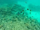 589 Mauritius island - Ile Maurice 2014 - GOPR2293_DxO Pbase.jpg