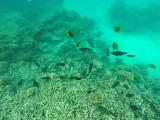 590 Mauritius island - Ile Maurice 2014 - GOPR2294_DxO Pbase.jpg