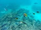 594 Mauritius island - Ile Maurice 2014 - GOPR2298_DxO Pbase.jpg