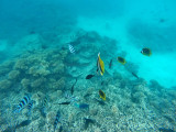 595 Mauritius island - Ile Maurice 2014 - GOPR2299_DxO Pbase.jpg