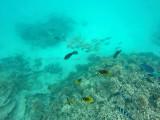 597 Mauritius island - Ile Maurice 2014 - GOPR2301_DxO Pbase.jpg