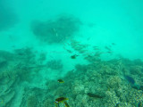598 Mauritius island - Ile Maurice 2014 - GOPR2302_DxO Pbase.jpg