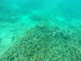 603 Mauritius island - Ile Maurice 2014 - GOPR2308_DxO Pbase.jpg