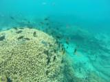 606 Mauritius island - Ile Maurice 2014 - GOPR2314_DxO Pbase.jpg