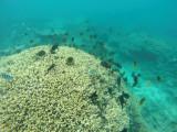 607 Mauritius island - Ile Maurice 2014 - GOPR2315_DxO Pbase.jpg