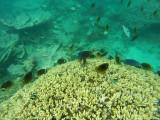 615 Mauritius island - Ile Maurice 2014 - GOPR2325_DxO Pbase.jpg