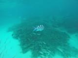 624 Mauritius island - Ile Maurice 2014 - GOPR2334_DxO Pbase.jpg