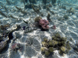 625 Mauritius island - Ile Maurice 2014 - GOPR2336_DxO Pbase.jpg