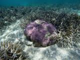 662 Mauritius island - Ile Maurice 2014 - GOPR2377_DxO Pbase.jpg