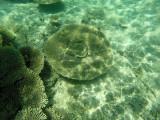 671 Mauritius island - Ile Maurice 2014 - GOPR2386_DxO Pbase.jpg