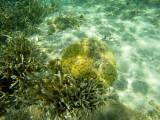 720 Mauritius island - Ile Maurice 2014 - GOPR2451_DxO Pbase.jpg