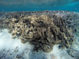 744 Mauritius island - Ile Maurice 2014 - GOPR2486_DxO Pbase.jpg