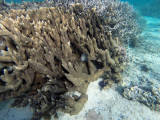 745 Mauritius island - Ile Maurice 2014 - GOPR2487_DxO Pbase.jpg