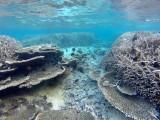 782 Mauritius island - Ile Maurice 2014 - GOPR2544_DxO Pbase.jpg