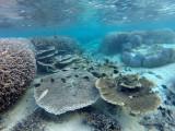 791 Mauritius island - Ile Maurice 2014 - GOPR2553_DxO Pbase.jpg