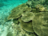 793 Mauritius island - Ile Maurice 2014 - GOPR2573_DxO Pbase.jpg