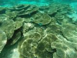 794 Mauritius island - Ile Maurice 2014 - GOPR2574_DxO Pbase.jpg