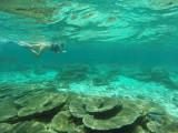 795 Mauritius island - Ile Maurice 2014 - GOPR2575_DxO Pbase.jpg