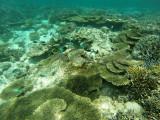 809 Mauritius island - Ile Maurice 2014 - GOPR2590_DxO Pbase.jpg