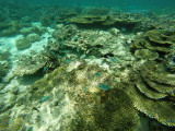810 Mauritius island - Ile Maurice 2014 - GOPR2591_DxO Pbase.jpg
