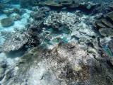 811 Mauritius island - Ile Maurice 2014 - GOPR2592_DxO Pbase.jpg