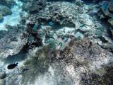812 Mauritius island - Ile Maurice 2014 - GOPR2593_DxO Pbase.jpg