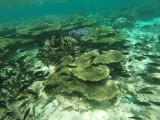 829 Mauritius island - Ile Maurice 2014 - GOPR2613_DxO Pbase.jpg