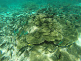 832 Mauritius island - Ile Maurice 2014 - GOPR2616_DxO Pbase.jpg