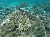 833 Mauritius island - Ile Maurice 2014 - GOPR2617_DxO Pbase.jpg
