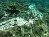 834 Mauritius island - Ile Maurice 2014 - GOPR2618_DxO Pbase.jpg