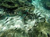 835 Mauritius island - Ile Maurice 2014 - GOPR2619_DxO Pbase.jpg