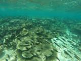 841 Mauritius island - Ile Maurice 2014 - GOPR2626_DxO Pbase.jpg