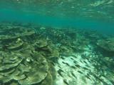842 Mauritius island - Ile Maurice 2014 - GOPR2627_DxO Pbase.jpg