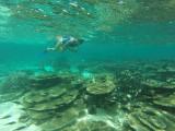 844 Mauritius island - Ile Maurice 2014 - GOPR2629_DxO Pbase.jpg