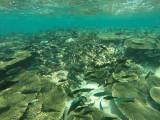 848 Mauritius island - Ile Maurice 2014 - GOPR2633_DxO Pbase.jpg