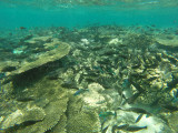 849 Mauritius island - Ile Maurice 2014 - GOPR2634_DxO Pbase.jpg