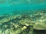 850 Mauritius island - Ile Maurice 2014 - GOPR2635_DxO Pbase.jpg