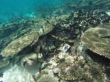 851 Mauritius island - Ile Maurice 2014 - GOPR2636_DxO Pbase.jpg