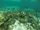 852 Mauritius island - Ile Maurice 2014 - GOPR2644_DxO Pbase.jpg