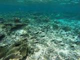 853 Mauritius island - Ile Maurice 2014 - GOPR2645_DxO Pbase.jpg