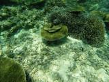 855 Mauritius island - Ile Maurice 2014 - GOPR2648_DxO Pbase.jpg