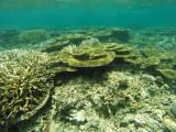 856 Mauritius island - Ile Maurice 2014 - GOPR2649_DxO Pbase.jpg