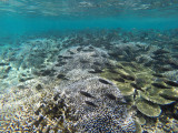 861 Mauritius island - Ile Maurice 2014 - GOPR2657_DxO Pbase.jpg