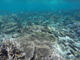 867 Mauritius island - Ile Maurice 2014 - GOPR2663_DxO Pbase.jpg