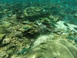 874 Mauritius island - Ile Maurice 2014 - GOPR2672_DxO Pbase.jpg