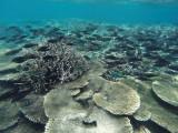875 Mauritius island - Ile Maurice 2014 - GOPR2673_DxO Pbase.jpg