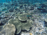 877 Mauritius island - Ile Maurice 2014 - GOPR2675_DxO Pbase.jpg