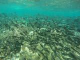 887 Mauritius island - Ile Maurice 2014 - GOPR2688_DxO Pbase.jpg