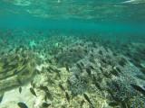 888 Mauritius island - Ile Maurice 2014 - GOPR2689_DxO Pbase.jpg